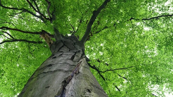 Image of tree - why wood is a good choice