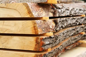 image of slices of wood